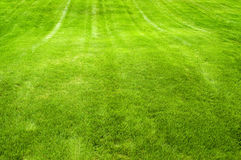 Lush Green Lawn stock images