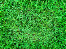 Lush Green Lawn Royalty Free Stock Photos