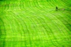 Lush Green Lawn Royalty Free Stock Photos