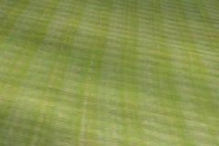 Lush green lawn background Stock Photos