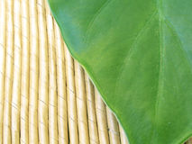 Lush green leaf Stock Photo