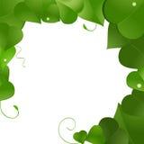 Lush green leaf border. Lush green leaves in border pattern Stock Photo