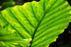 Lush Green Leaves Stock Photo