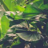 Lush green leaves in jungle Stock Image