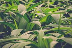 Lush green leaves in jungle Stock Images