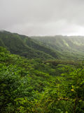 Lush Green Manoa Valley Oahu Hawaii Royalty Free Stock Image