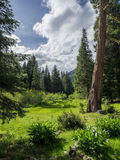 Mountain meadow in spring Royalty Free Stock Photography