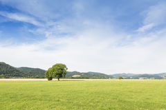 Lush green meadow summery blue sky Stock Images