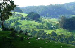 Lush green mountain pasture. Stock Photo
