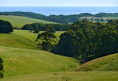 Lush green mountain pasture. Stock Images