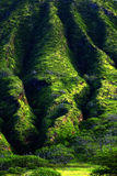 Lush Green Mountain Tropical Foliage. On cliffs Stock Images