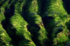 Lush Green Mountain Tropical Foliage Stock Photography
