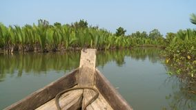 Lush green Nipa palms on Kangy River, Myanmar