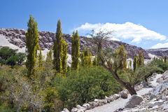 Lush green oasis in a desert valley. Rocky path inside Atacama desert canyon, lush with green trees and shrubs Stock Photography