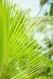 Lush green palm branch Stock Photo