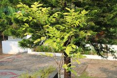 A lush green plant on a bright sunny morning. A sunny bright day royalty free stock photography