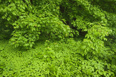 Lush green plant growth in springtime. Stock Photography