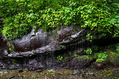 Lush green plant, moss and lichen on rock wall with waterfall dr Stock Image