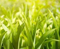 Lush green plants. Closeup background stock image