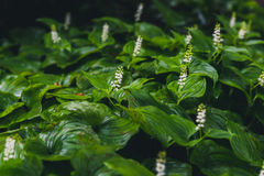 Lush green plants. Royalty Free Stock Images