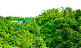 Lush green rain forest tropical jungle in South Eeast Asian morning sunrise stock photography