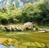 Lush green rainforest along Pororai River, NZ Stock Photos