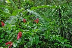 Lush green rainforest , Costa Rica Royalty Free Stock Photos