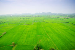 Lush green rice field and blue sky, In Asia Stock Photo