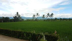 Rice paddies, swaying palm trees, and mountains in Ormoc City, Leyte, Philippines