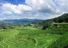 Lush green rice terraces of Longshen in Southern China Royalty Free Stock Photo