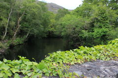 Lush green river in the Irish countryside Royalty Free Stock Photo