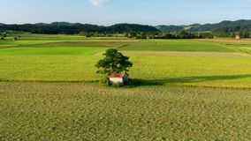 Lush green rural landscape with fields and pastures with an old barn under a large tree stock video footage