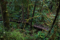 Lush & Green. Schooner Cove Trail, Tofino, Ucluelet, British Columbia Royalty Free Stock Photos