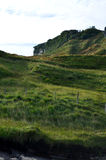Lush Green Sea Cliffs with Lots of Grass. Thick grass growing on the sea cliffs of Bearreraig Bay in Scotland Stock Photography