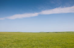 Lush green spring grass in prairie pasture stock photography