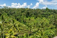 Lush green terraced farmland in Bali Royalty Free Stock Photo