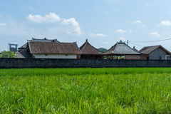 Lush green terraced farmland in Bali Royalty Free Stock Photos