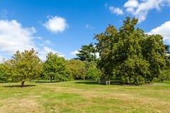 Lush Green Tranquil Woodland Garden. In Sunshine Stock Photography