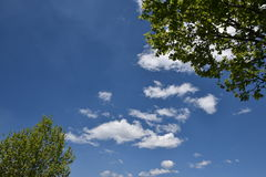 Lush Green Tree with Blue Sky in background. Lush  Green Tree with Blue Sky in background Royalty Free Stock Image
