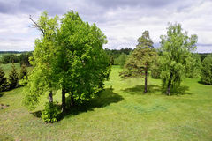 Lush green trees. And cloudy sky Stock Photography