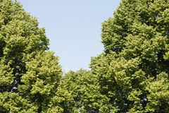 Lush green trees and blue sky Stock Images