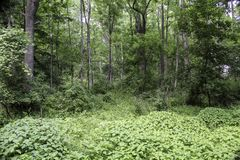 Lush green trees and plants in a Woodland background. Scenic Lehigh Valley Trail in Scottsville, NY. Natural parkland stock photos