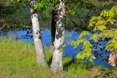 Lush green trees by pond Stock Photos