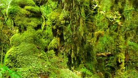 US National Parks, Olympic National Park, Washington. Lush green trees in rainforest in Olympic National Park, Washington. U.S. National Parks royalty free stock images