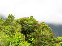 Lush green trees with red flowers and foggy mountains in the background stock photo