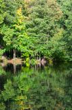 Lush green trees reflecting in the water surface. Lush green trees reflecting in the water surface royalty free stock photography