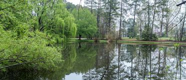 Lush green trees and reflection on pond. In early morning stock images