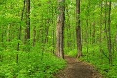 Lush green trees. In spring time near Detroit Michigan royalty free stock photos