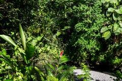 Lush green tropical foliage and plants at Togitogiga Waterfall o Royalty Free Stock Image
