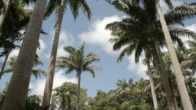 Lush green tropical forest. Panning shot of tall palm trees in a lush green tropical garden. Tropical forest under the blue sky stock video footage